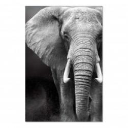 Toile Elephant 80X120CM